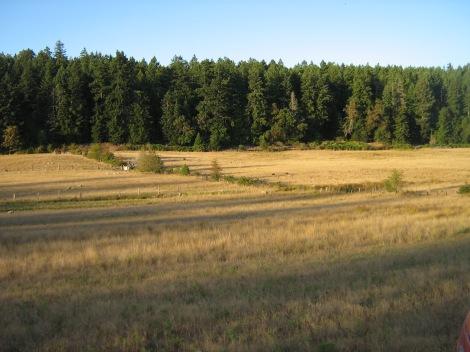 dry summer pasture